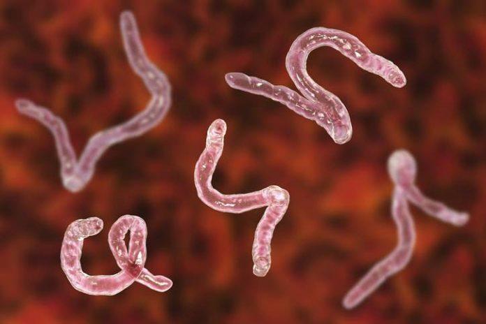 Cosa sono i parassiti?