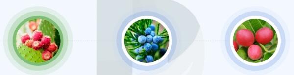 ¿Qué ingredientes contiene Detoximer?